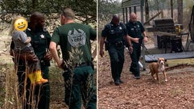 Family dog protects boy, 3, lost in Florida woods until police arrived