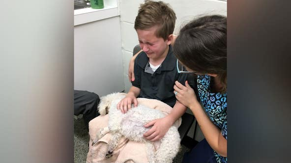 Florida boy's love for shelter dogs sheds light on foster system