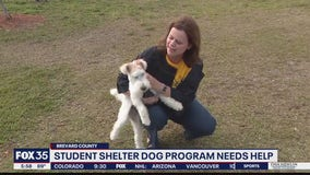 Student shelter dog program needs helps