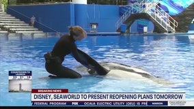 Disney, SeaWorld to present reopening plans