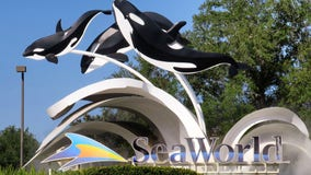 Face masks, temperature checks: SeaWorld Orlando reopens with new safety measures