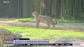 David Does It: Busch Gardens reopens