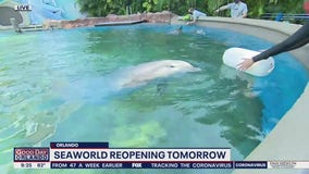 David Does It: SeaWorld reopening Thursday