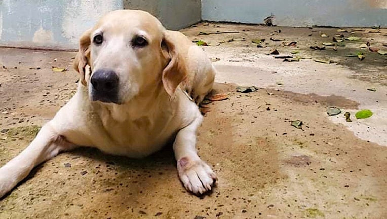 wings_of_rescue_puerto_rico_dogs_01.jpg