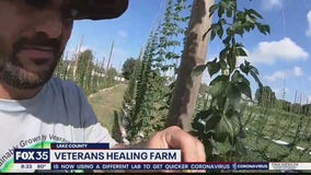 David Does It: Veterans Healing Farm