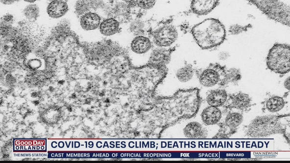 COVID-19 cases climb, deaths remain steady