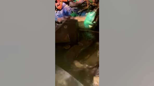 Walt Disney World guests captures Splash Mountain vehicle submerged