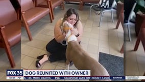 Dog reunited with owner after missing for 3 years