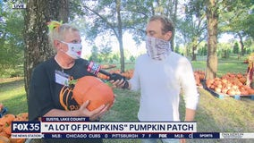 David Does It: 'A Lot of Pumpkins' pumpkin patch