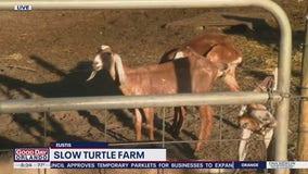 David Does It: Slow Turtle Farm