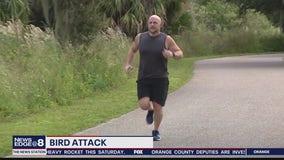 Bird dive-bombs jogger in Orlando's Baldwin Park