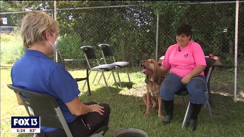 rescued-bloodhound-polk-florida-3.jpg