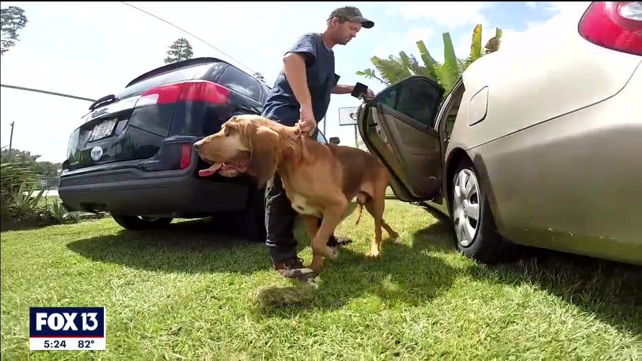 rescued-bloodhound-polk-florida-4.jpg