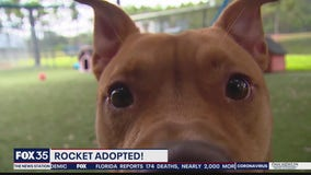 Dog adopted after living in animal shelter for more than 200 days