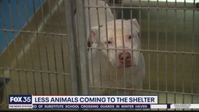 Less animals coming to the shelter
