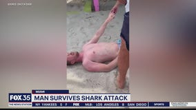 Man survives shark attack