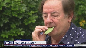 'Miracle Leaf' touted as natural sleep aid