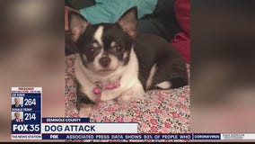 Dog killed in attack by another dog