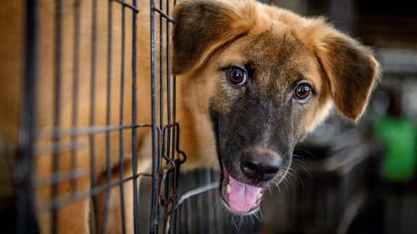 Florida animal shelter offering free adoptions on Black Friday weekend
