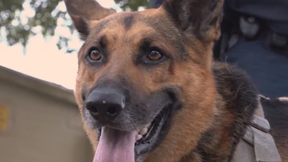 Central Florida K9 wins 'America's Top Dog' competition