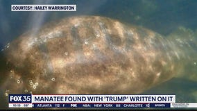 Manatee found with 'Trump' scraped on back