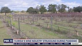 Florida's wine industry struggling