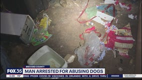 Man accused of abusing dogs
