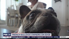 Central Florida French Bulldog owners concerned after Lady Gaga's dog theft