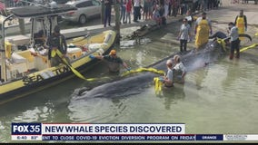 New whale species discovered