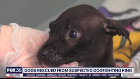 Humane Society caring for 42 rescues seized in alleged dogfighting ring