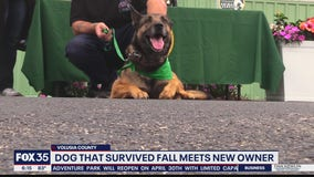 Dog thrown from balcony gets new life with military vet