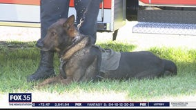 AG, law enforcement pushing legislation that protects Florida police K-9s