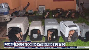 Arrests made in alleged dogfighting ring
