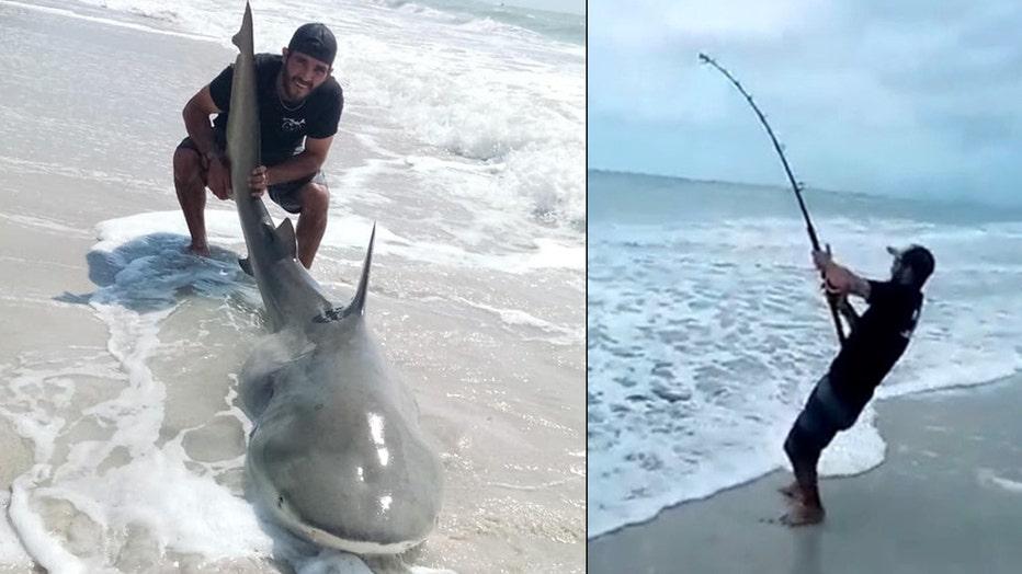 shark catch