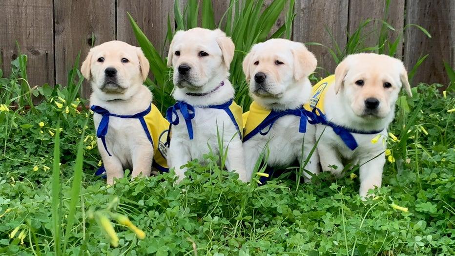 Z-pups-in-capes.jpg