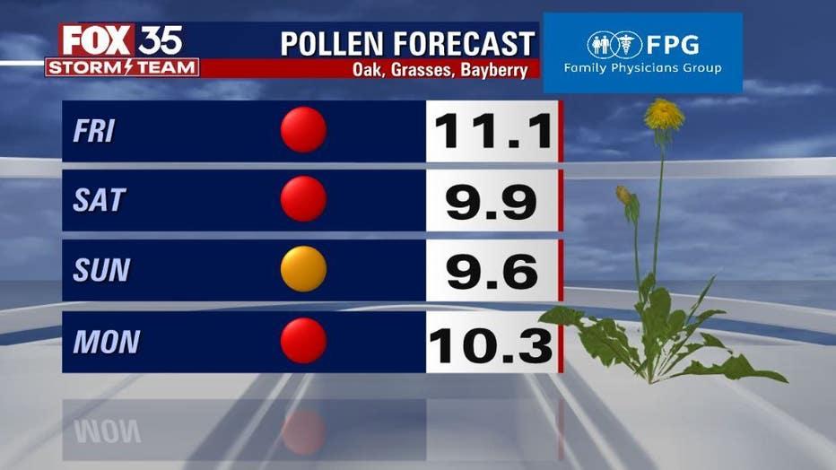 pollen-1.jpg