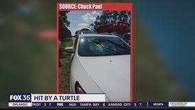 Turtle crashes through windshield of car traveling on I-95