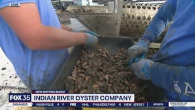 Indian River Oyster Company