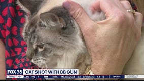 Cat shot with BB gun in Orange County