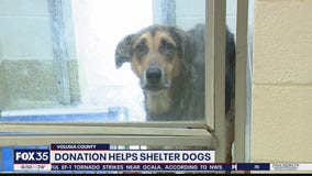 Donation helps dogs at Volusia County shelter