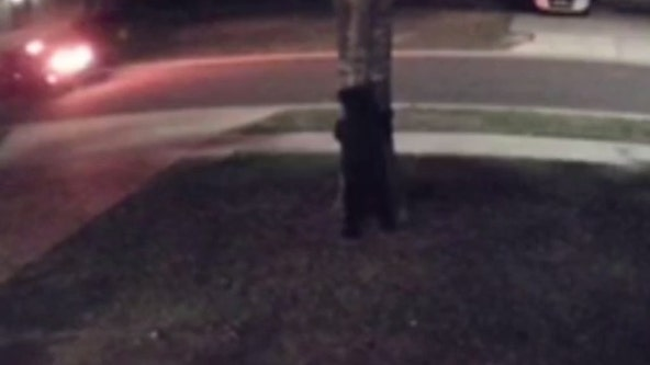 'Hide and seek': Central Florida resident spots bear roaming yard