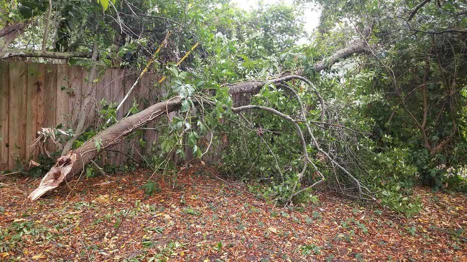 conway_storm_damage_sheri.jpg