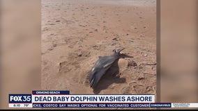 Baby dolphin washes ashore
