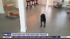 Waiting on the moving truck