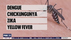 Modified mosquitoes to be released in Florida Keys