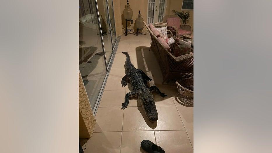 gator223.jpeg