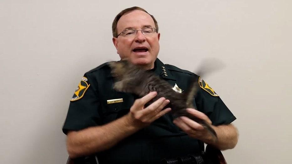 grady-with-his-kitten.mp4_.00_00_02_07.Still002.jpg