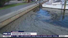 Massive fish kill in Melbourne