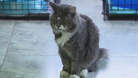 'Breaking my heart': No-kill animal rescue stops cat intake, can't afford vet bill