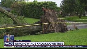 Tree falls in Maitland neighborhood